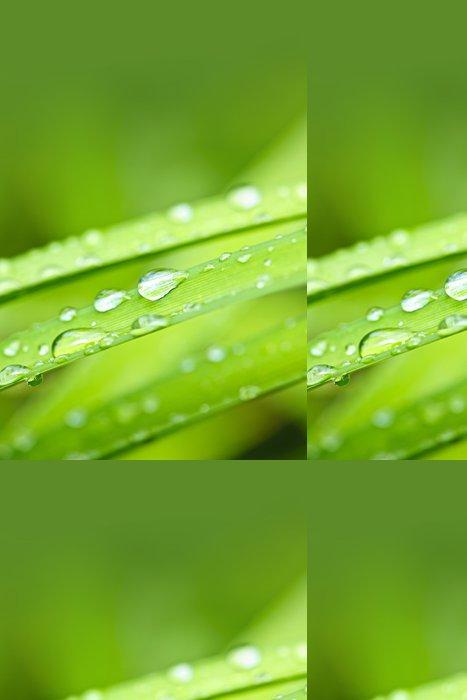 Tapeta Pixerstick Kapky vody na travním kotoučem - Rostliny