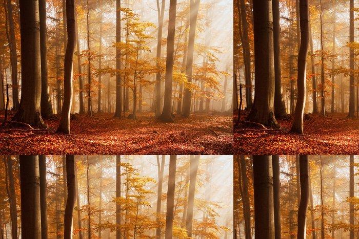 Tapeta Pixerstick Karpatské bukové lesy, Slovensko. - Témata
