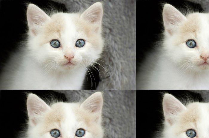 Tapeta Pixerstick Katzenporträt - Savci