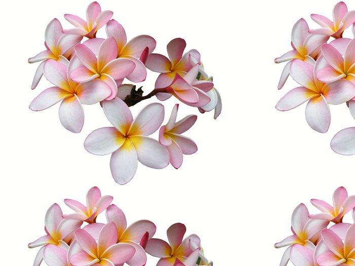 Tapeta Pixerstick Keře vor bílém pozadí - Květiny