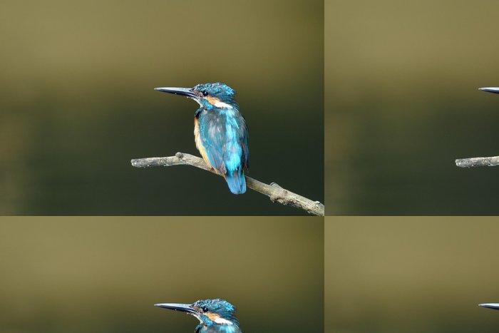 Vinylová Tapeta Kingfisher perch - Ptáci