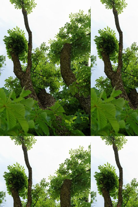 Vinylová Tapeta Kmen stromu - Roční období