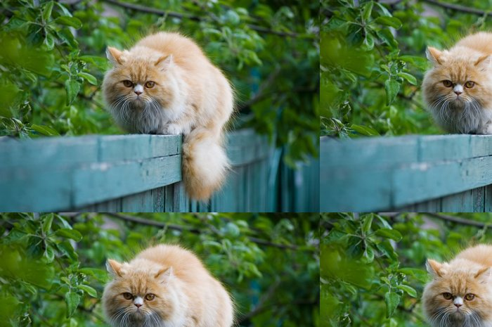 Tapeta Pixerstick Kočka na plot - Savci