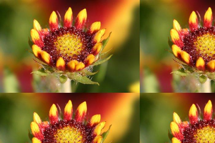 Tapeta Pixerstick Kokardenblume - Květiny