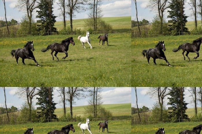 Tapeta Pixerstick Koně Koppel - Savci