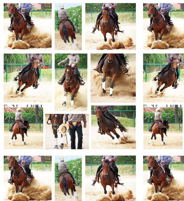 Tapeta Pixerstick Koně v reining soutěž, koláže - Individuální sporty