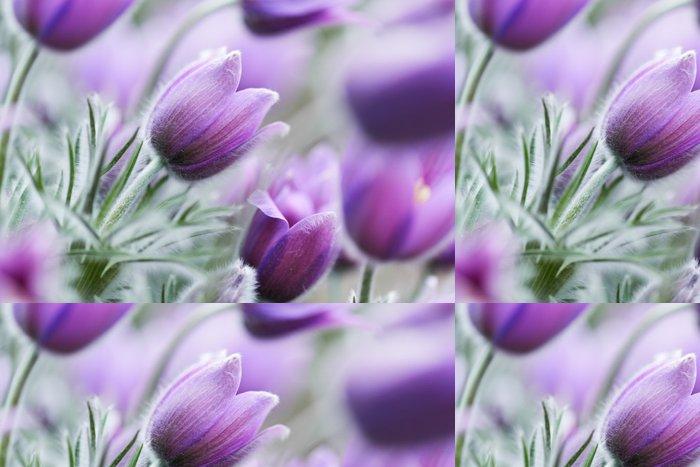 Tapeta Pixerstick Koniklec květiny - Roční období