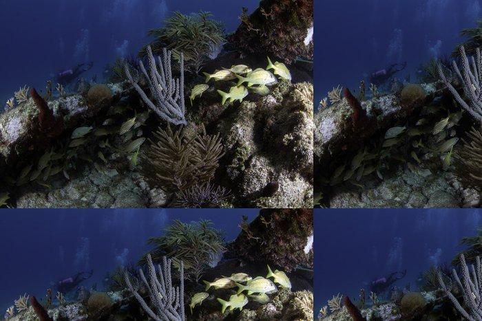 Tapeta Pixerstick Korálové útesy v Severní Americe - Podvodní svět