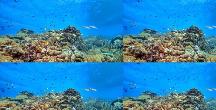 Tapeta Pixerstick Korálový útes panoramatické - Korálové útesy