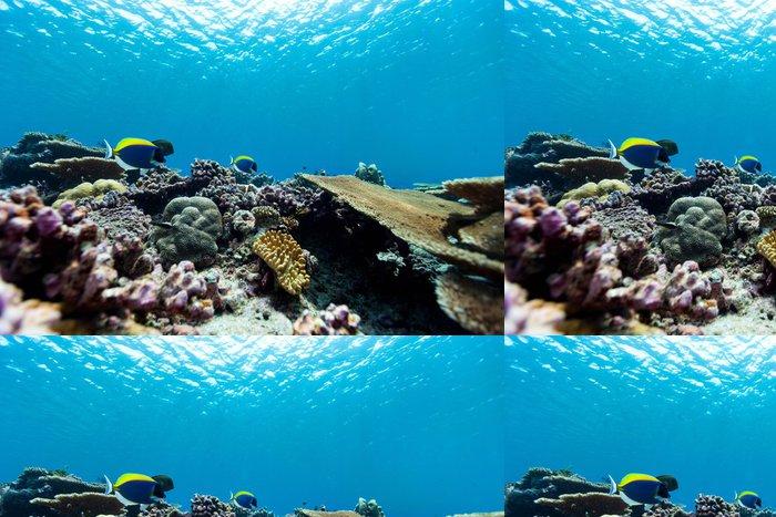 Tapeta Pixerstick Korálový útes pod vodou - Podvodní svět
