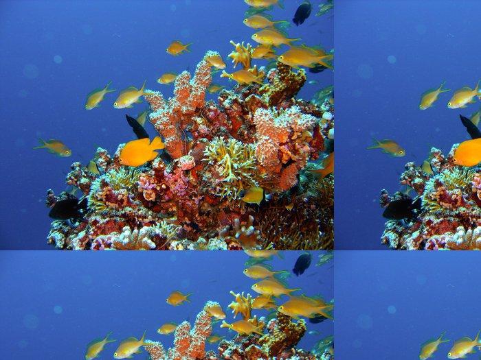 Tapeta Pixerstick Korálový útes ryby - Vodní a mořský život