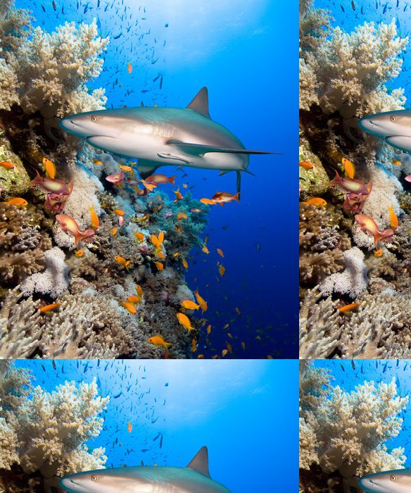 Vinylová Tapeta Korálový útes se žralokem - Žraloci
