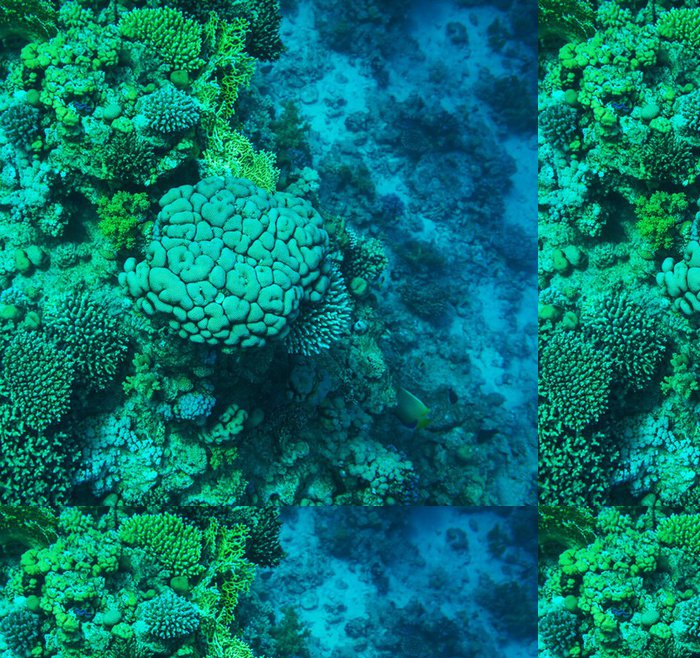 Vinylová Tapeta Korálový útes - Podvodní svět