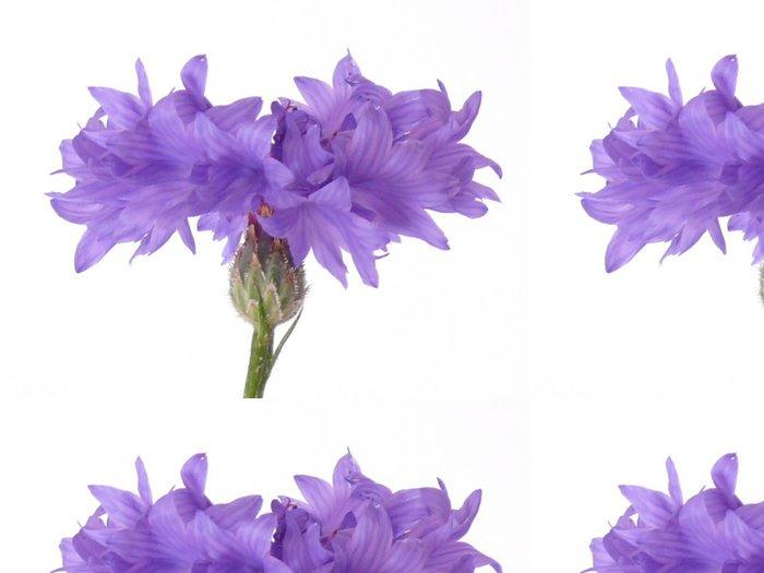 Vinylová Tapeta Kornblume, makro - Květiny
