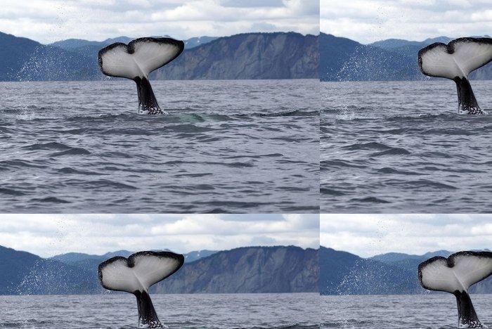 Tapeta Pixerstick Kosatka ocas - Vodní a mořský život