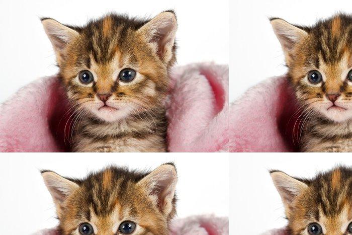 Tapeta Pixerstick Kotě v růžové deky hledá upozornění - Savci
