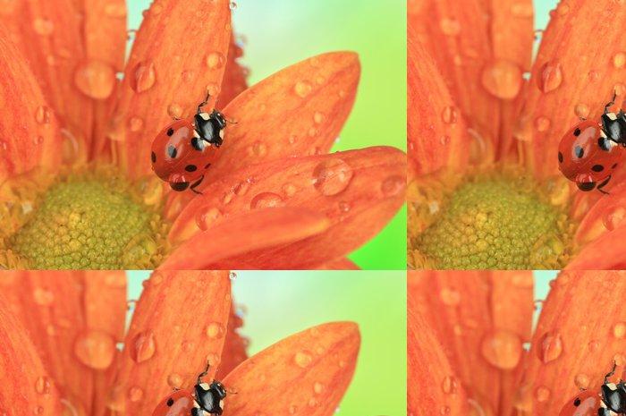 Tapeta Pixerstick Krásná beruška na květu, close up - Květiny
