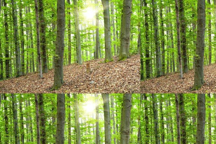 Tapeta Pixerstick Krásná krajina s bukovým lesem a slunečními paprsky - Stromy