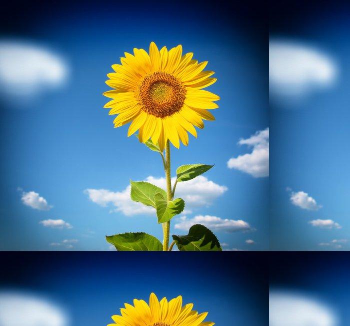 Tapeta Pixerstick Krásná krajina s slunečnicové pole nad cloudy modrou oblohu - Květiny
