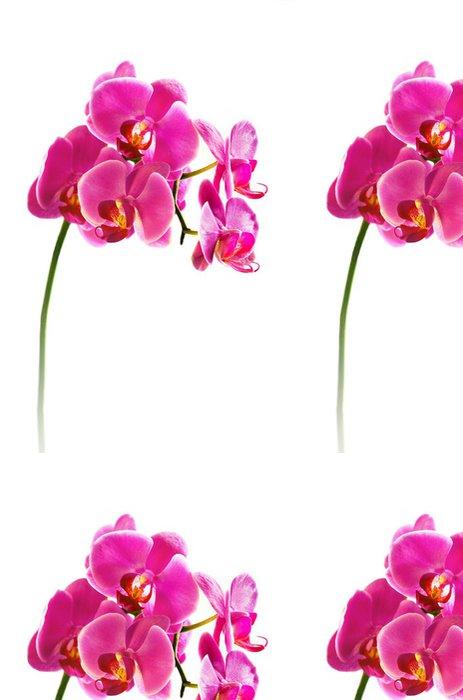 Tapeta Pixerstick Krásná květina orchidej - Nálepka na stěny