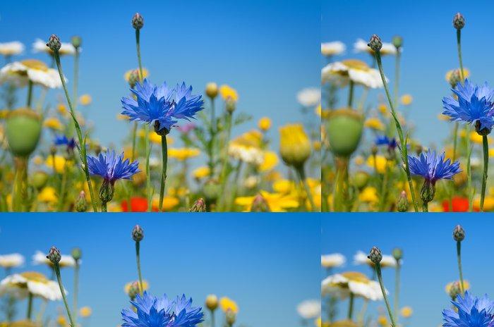Tapeta Pixerstick Krásná modrá chrpa - Květiny