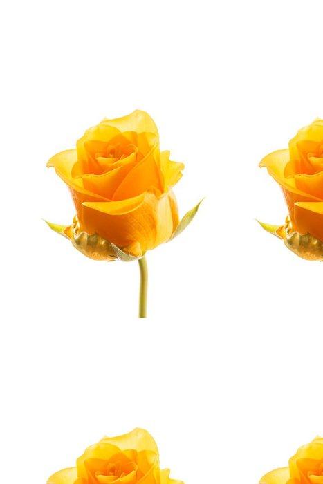 Tapeta Pixerstick Krásná růže - Květiny