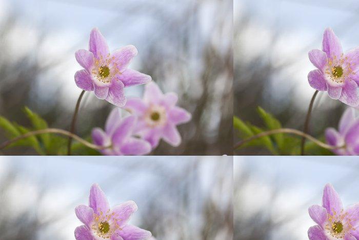 Tapeta Pixerstick Krásná Sasanka (Anemone nemorosa) - Roční období