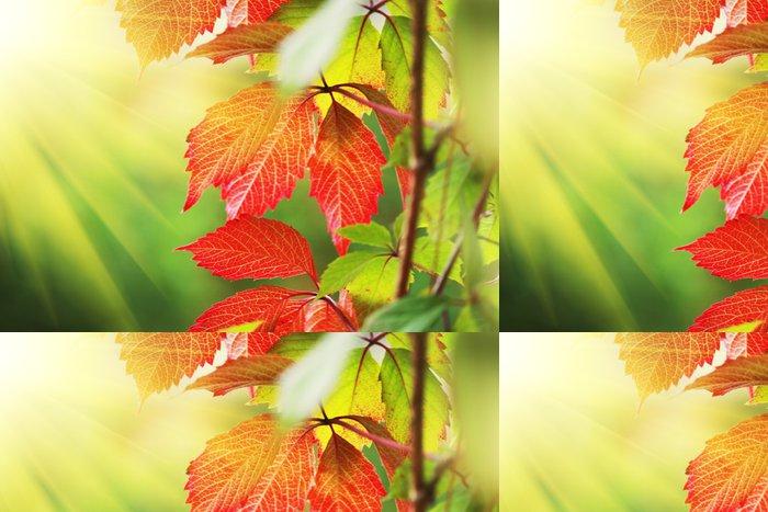 Tapeta Pixerstick Krásné červené podzimní listí na slunci - Roční období