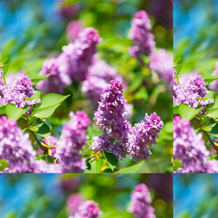 Tapeta Pixerstick Krásné kvetoucí květy lila strom na jaře - Příroda a divočina