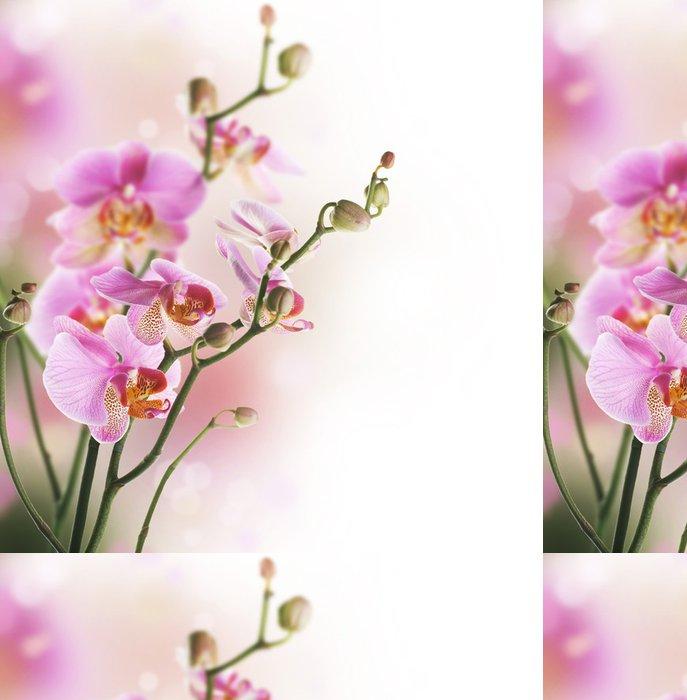 Vinylová Tapeta Krásné Orchid border.Isolated na white.Selective zaměření - Témata