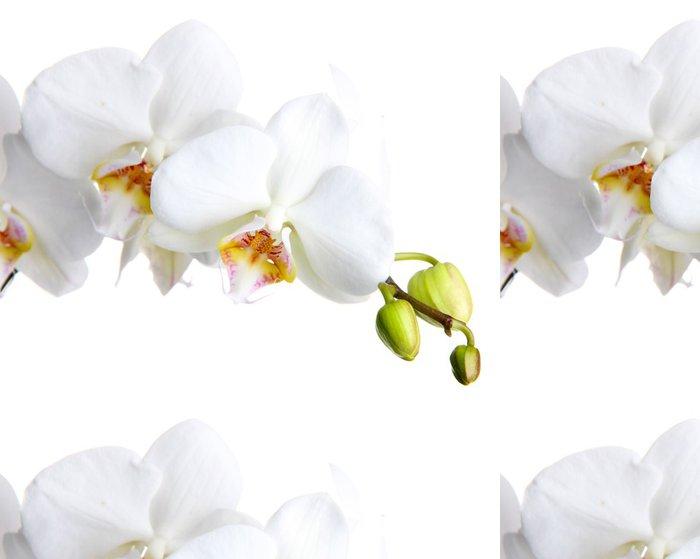 Tapeta Pixerstick Krásné orchideje, izolovaných na bílém - Nálepka na stěny