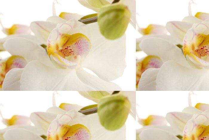 Vinylová Tapeta Krásné orchideje, izolovaných na bílém - Květiny