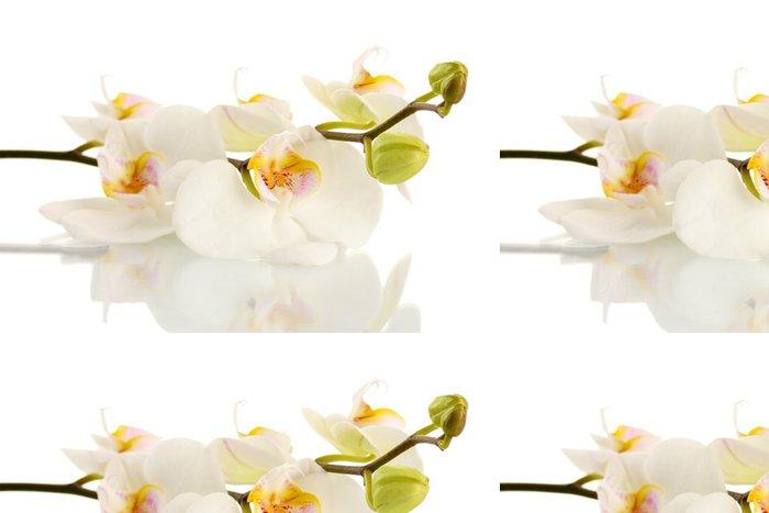 Tapeta Pixerstick Krásné orchideje, izolovaných na bílém - Květiny