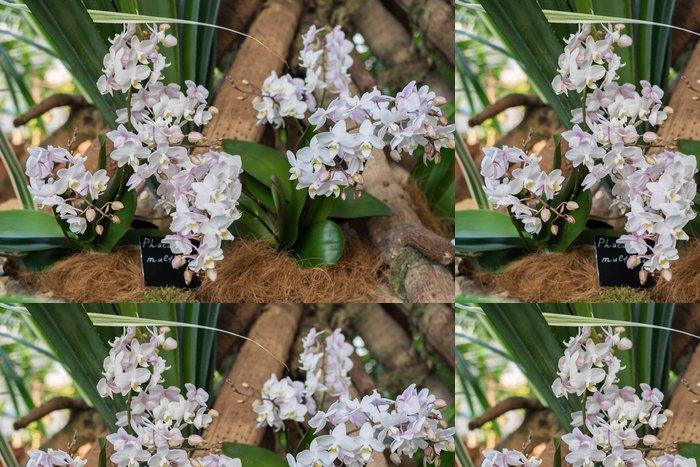 Vinylová Tapeta Krásné orchideje v interiéru obývacího pokoje - Květiny