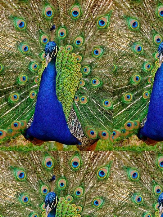 Vinylová Tapeta Krásné Peacock - Asie