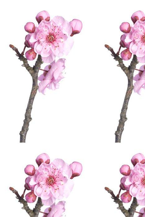 Tapeta Pixerstick Krásné růžové třešňový květ izolovaných na bílém pozadí. - Roční období