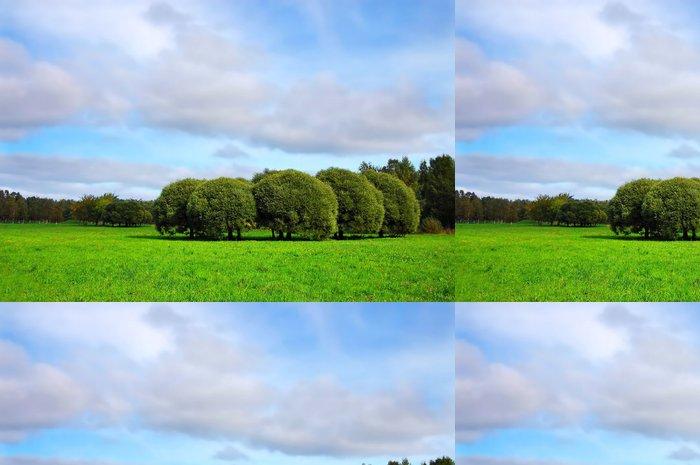 Tapeta Pixerstick Krásné zelené louce s vrbami - Roční období