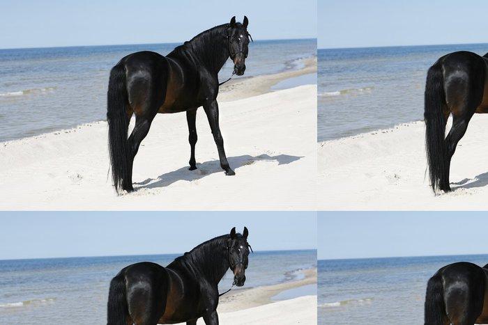 Tapeta Pixerstick Krásnejch hřebec volně stojící na pláži - Savci