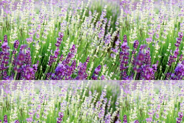 Tapeta Pixerstick Krásný detail Levandulová pole - Témata