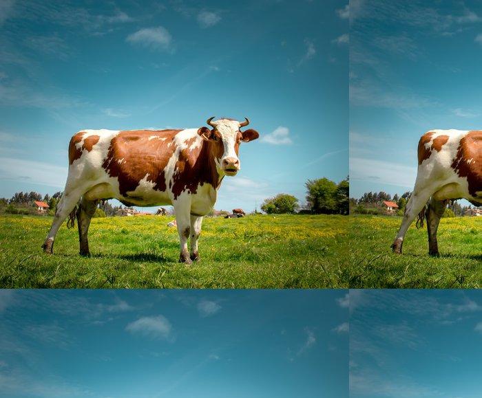 Tapeta Pixerstick Kráva - Savci
