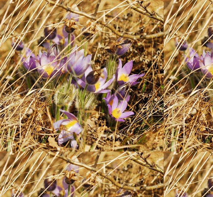 Tapeta Pixerstick Kuhschelle - Květiny