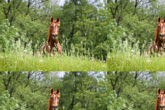Tapeta Pixerstick Kůň na louce - Individuální sporty