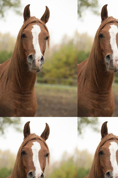 Tapeta Pixerstick Kůň - Savci