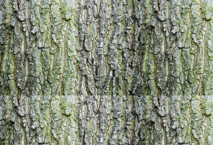 Tapeta Pixerstick Kůra textury - Stromy