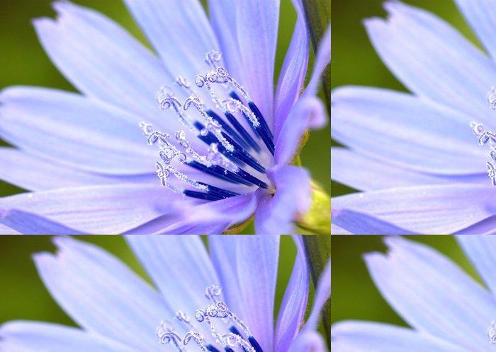 Tapeta Pixerstick Květ divoké čekanky. - Roční období