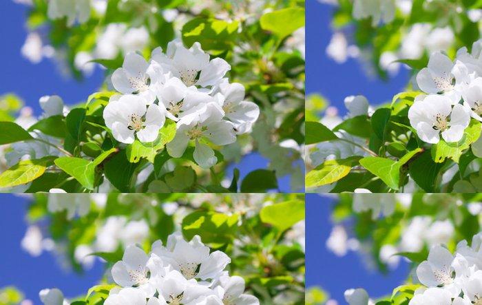 Tapeta Pixerstick Květ jabloně - Květiny
