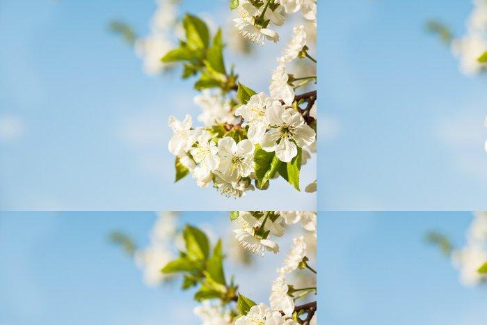 Tapeta Pixerstick Květ jabloně - Jabloně