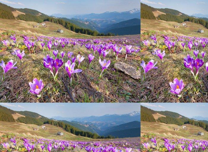 Tapeta Pixerstick Květ krokusy na jaře v horách - Hory
