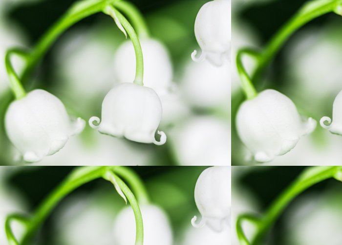 Vinylová Tapeta Květ lilie-of-the-údolí makro detailní - Květiny