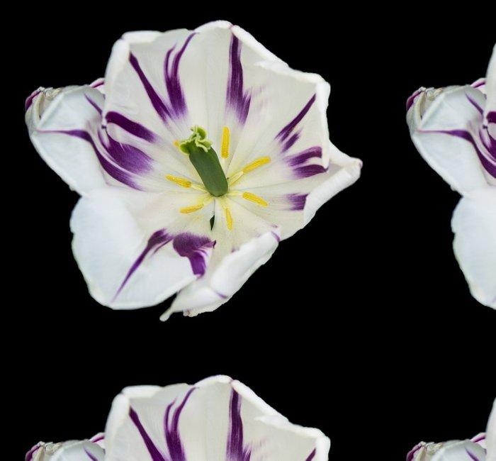 Tapeta Pixerstick Květ - Květiny